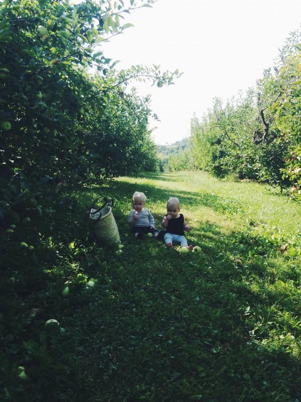 Apple Orchard Trip