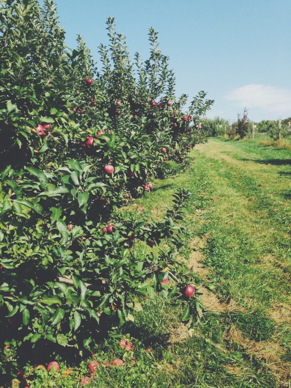 Apple Orchard Trip