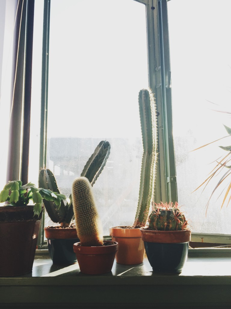 Friday Flotsam - cactus in dentist chair