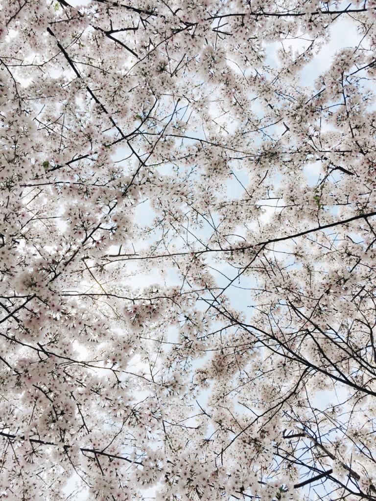 Friday Flotsam - spring blooms!