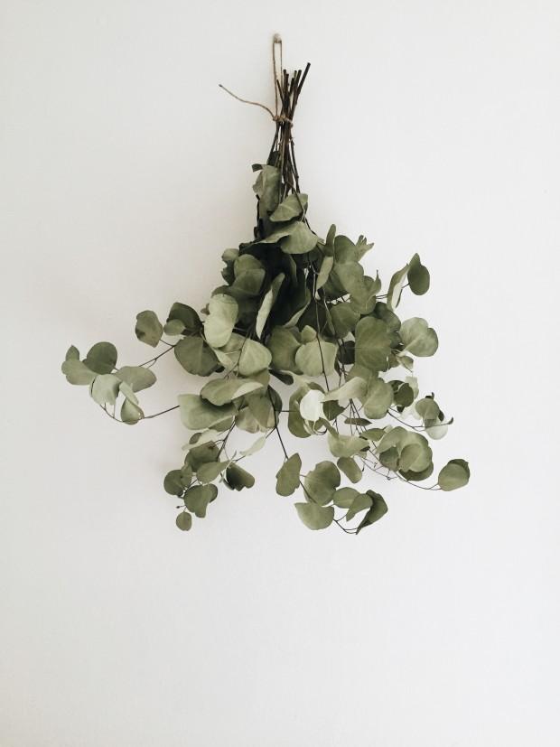 Dried Hanging Eucaplytus