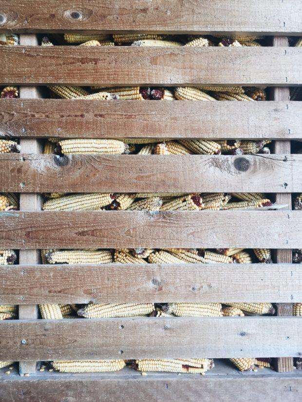 Piles of corn - Friday Flotsam