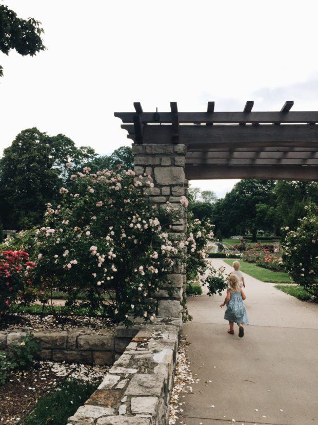 Rose Garden Babies