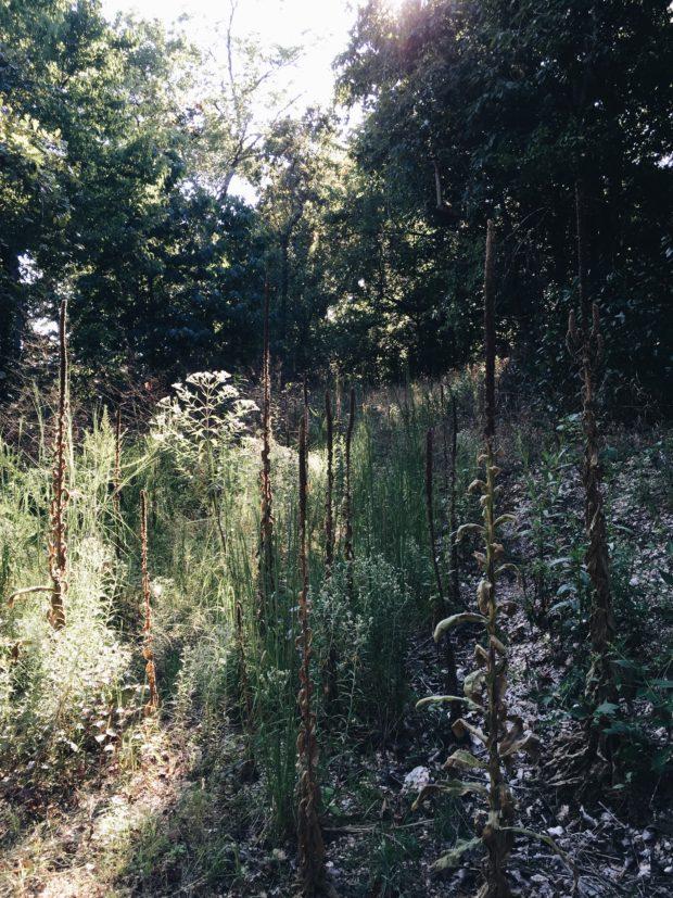 The Woods in Eureka Springs, AR