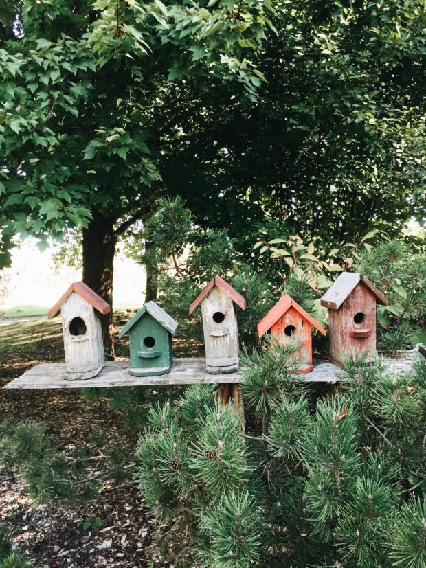 A row of birdhouses