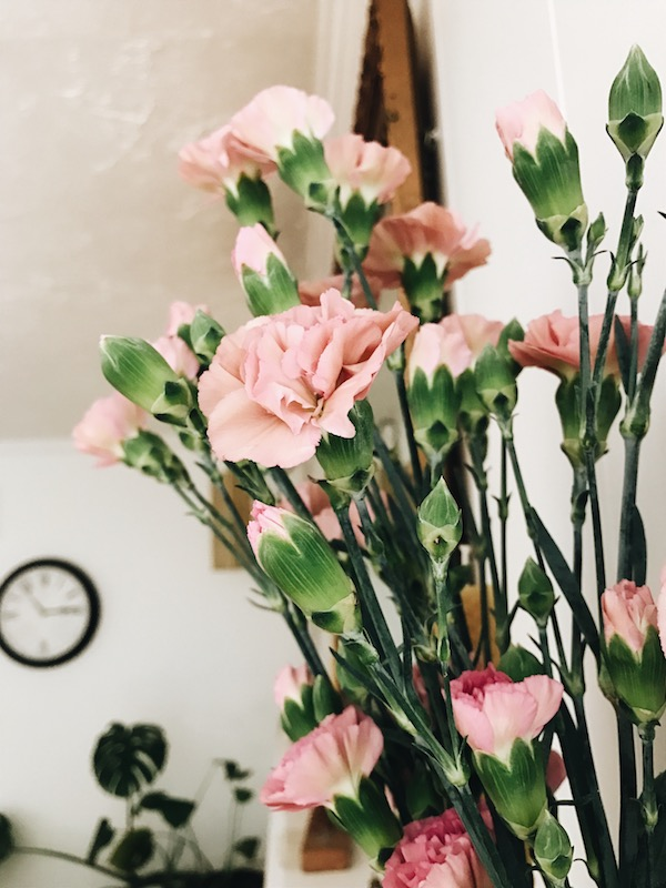 pink flowers in the winter
