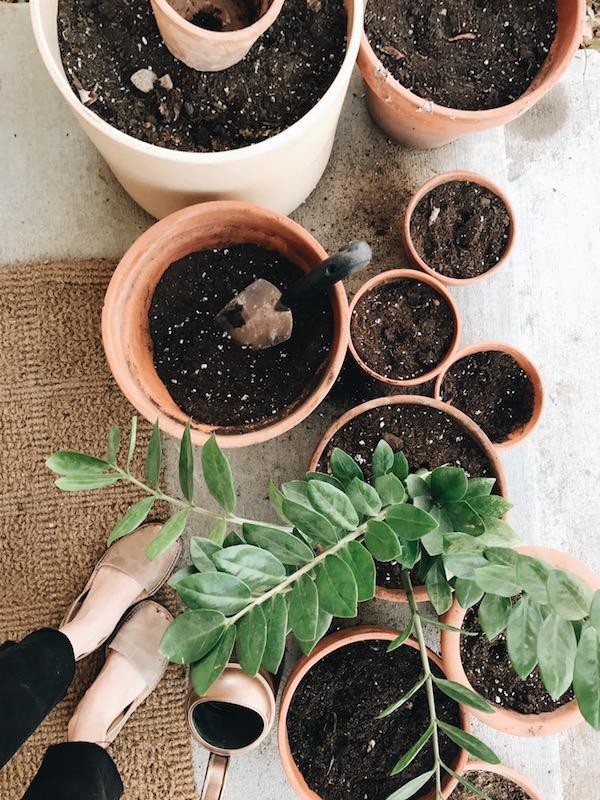 Planters, planters, planters