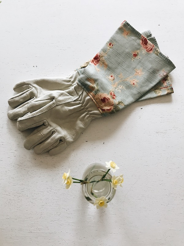 gardening gloves and mini daffodils