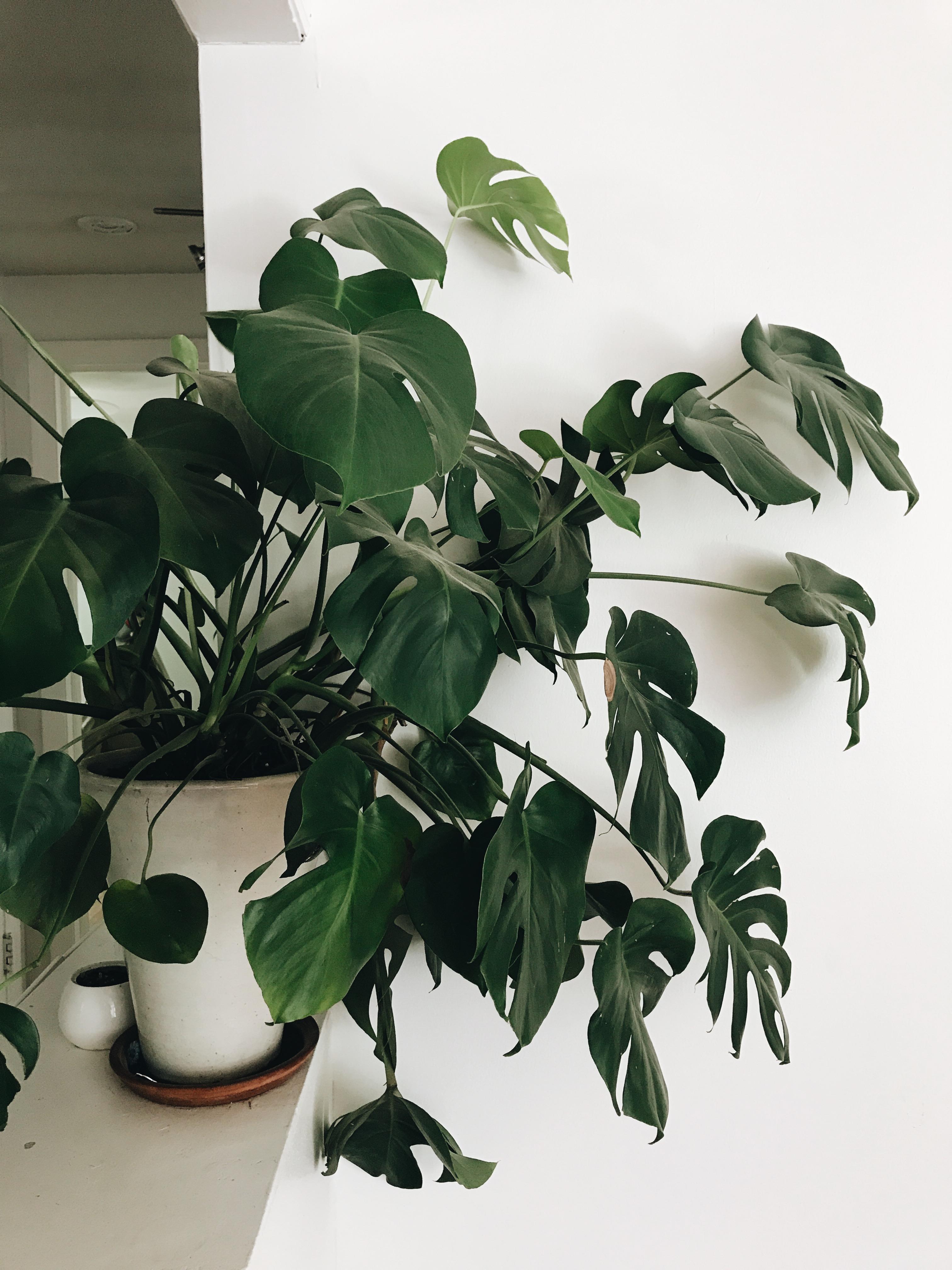 Weidner Houseplants / Bev Cooks