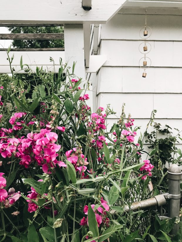 backyard flowers and a gold windchime / Bev cooks