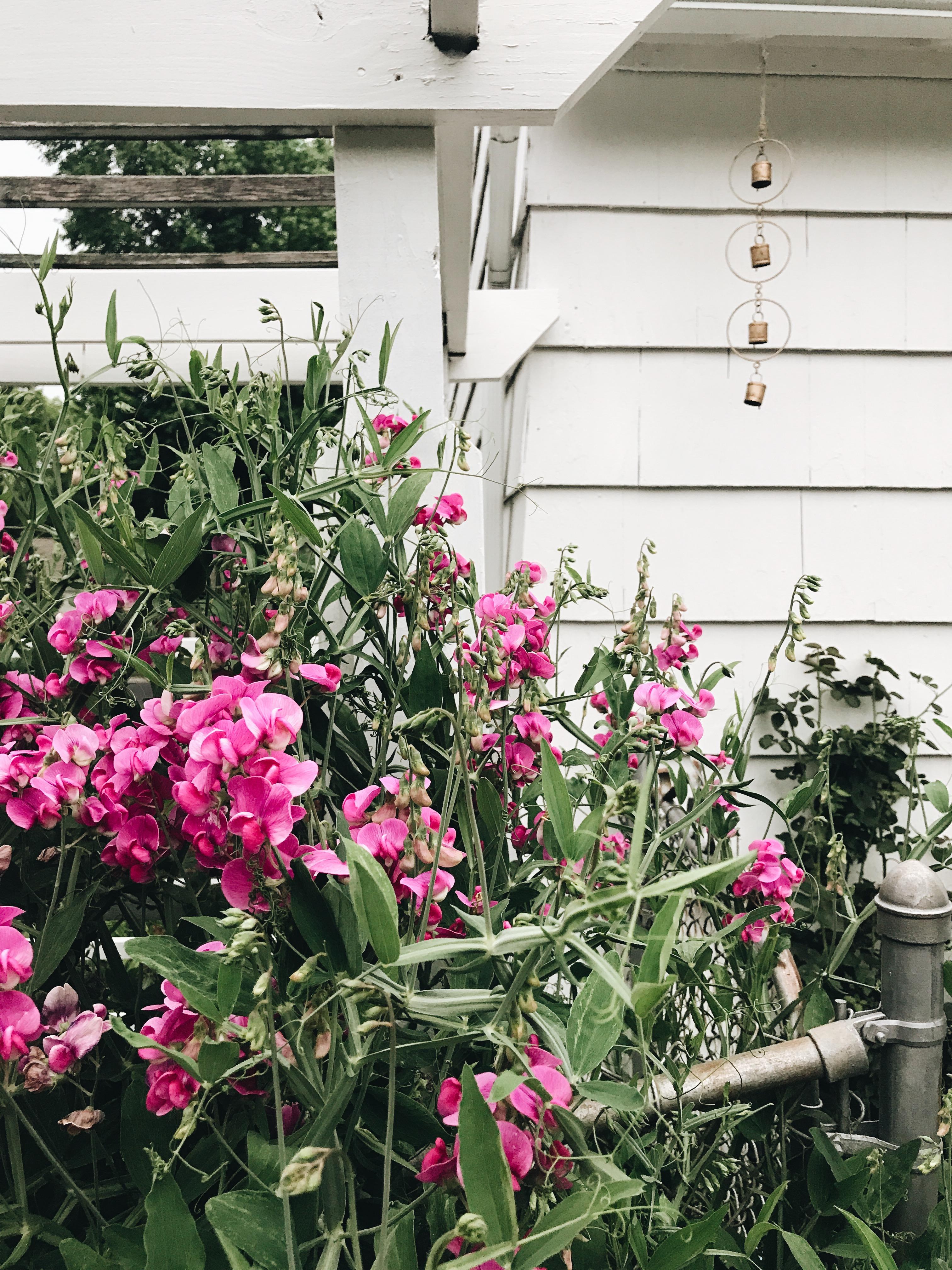 Backyard flowers and a gold windchime