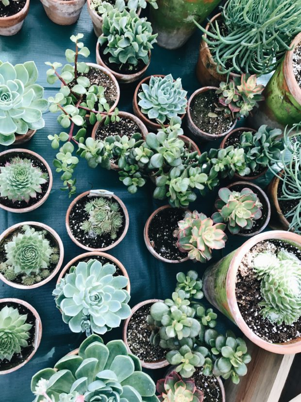 succulent heaven