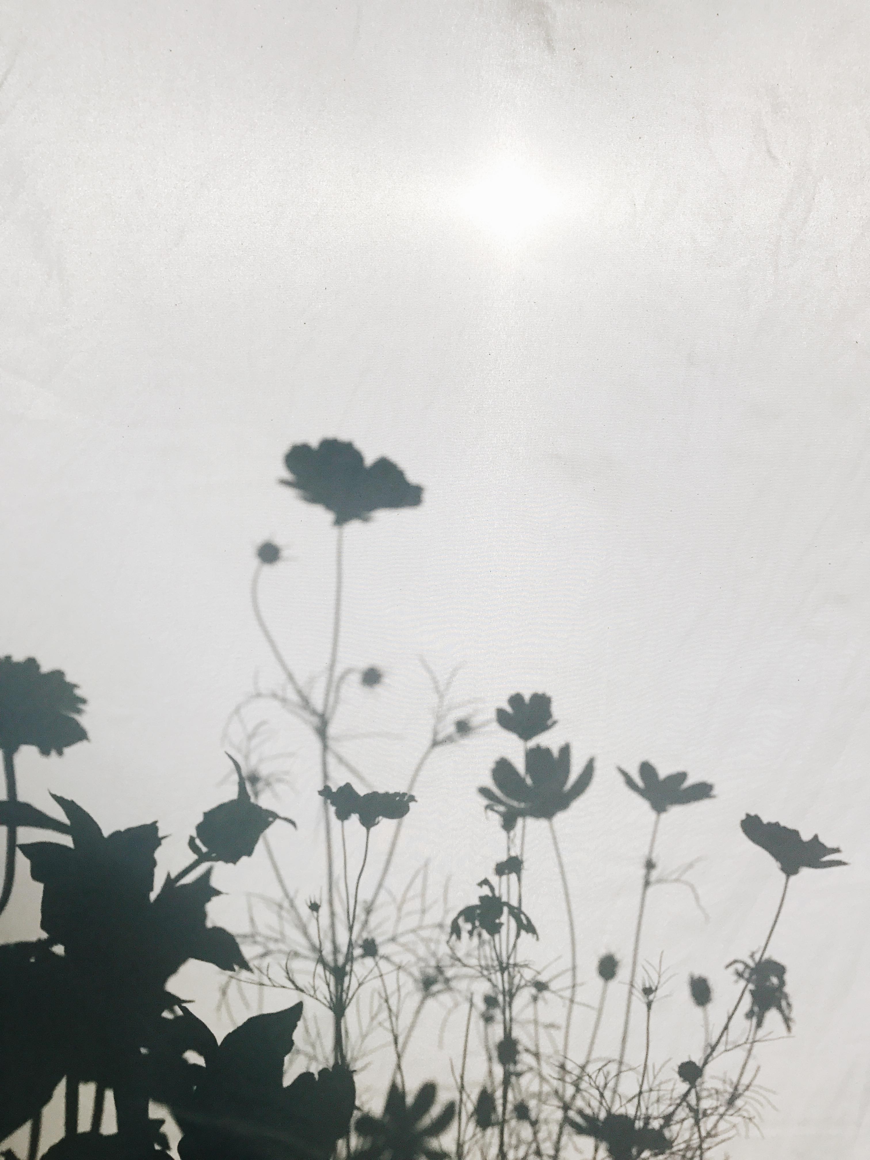 flower shadows behind a sheet