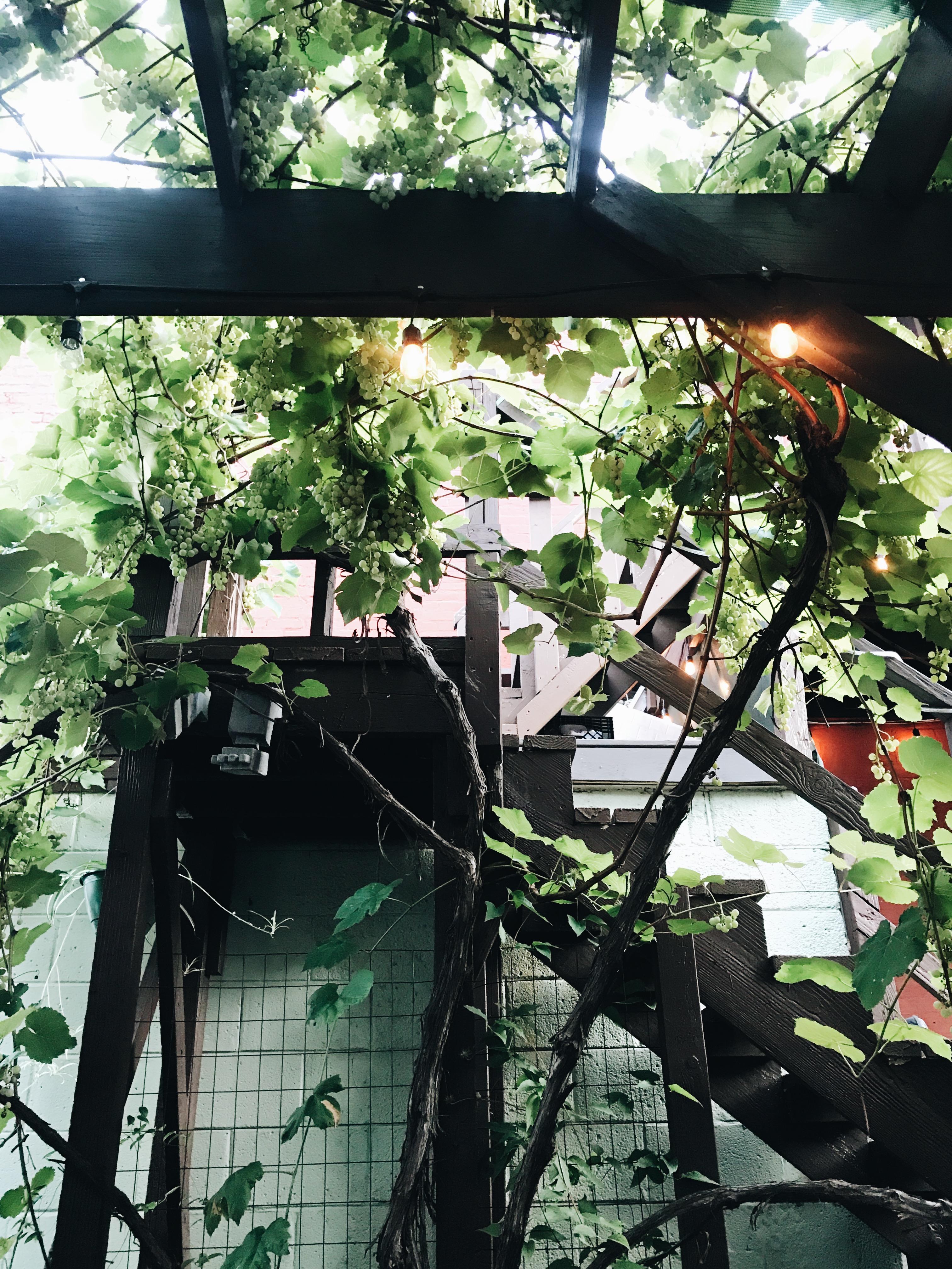 grapes at Westside Local - KC