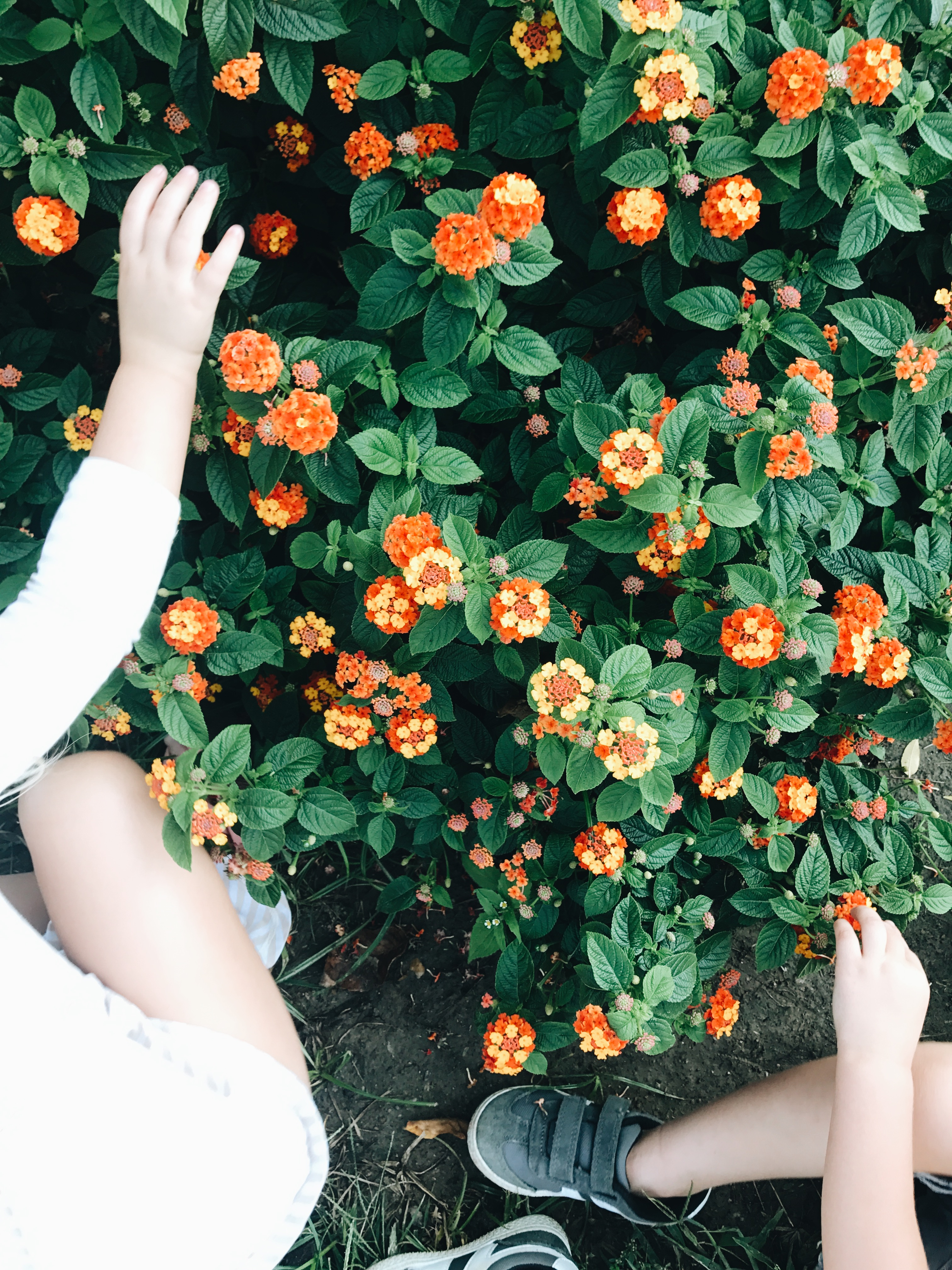 Flowers and toddler hands