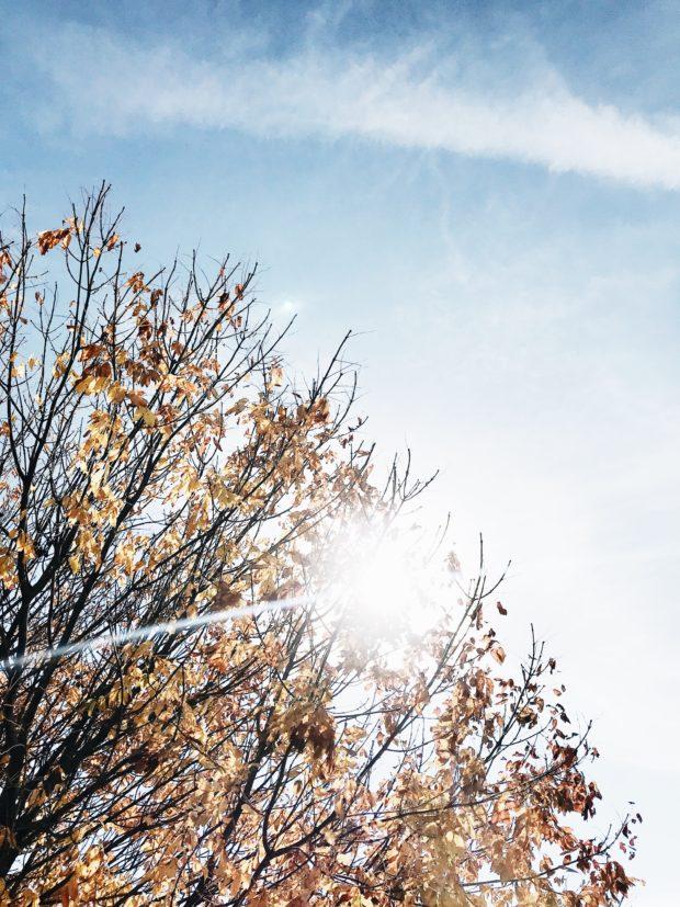 fall tree in the sun
