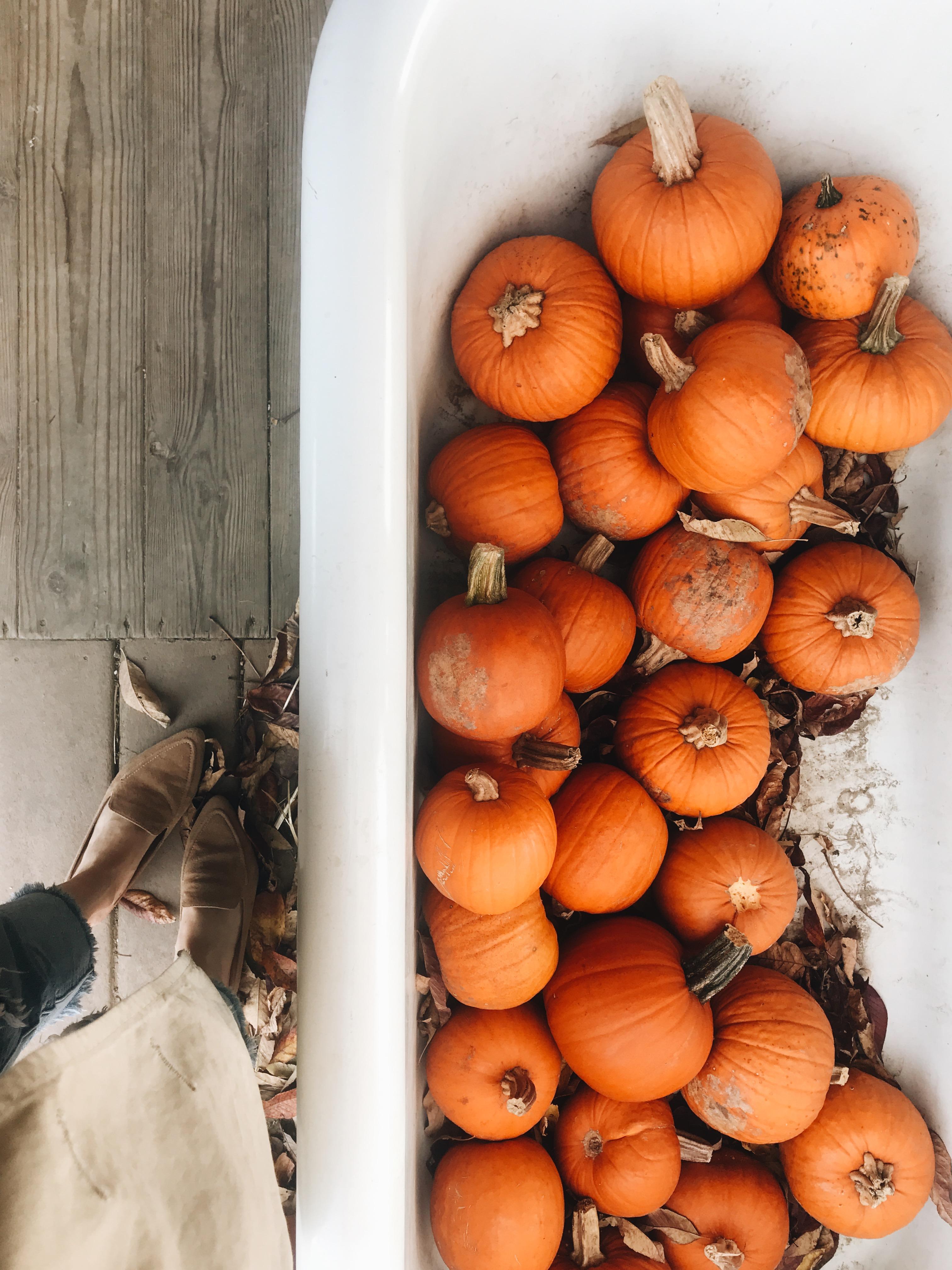 pumpkins in a tub