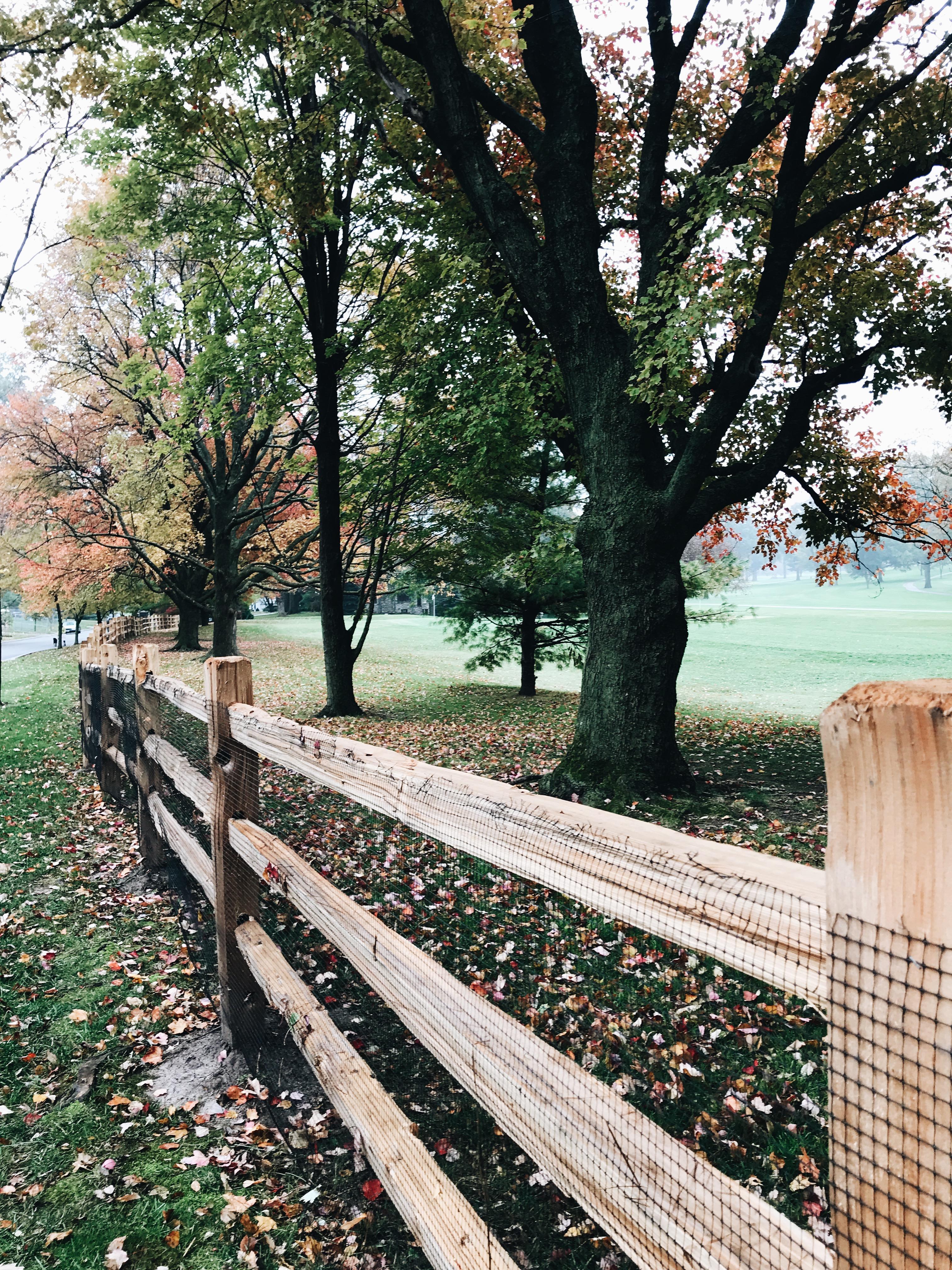 lovely fall scene