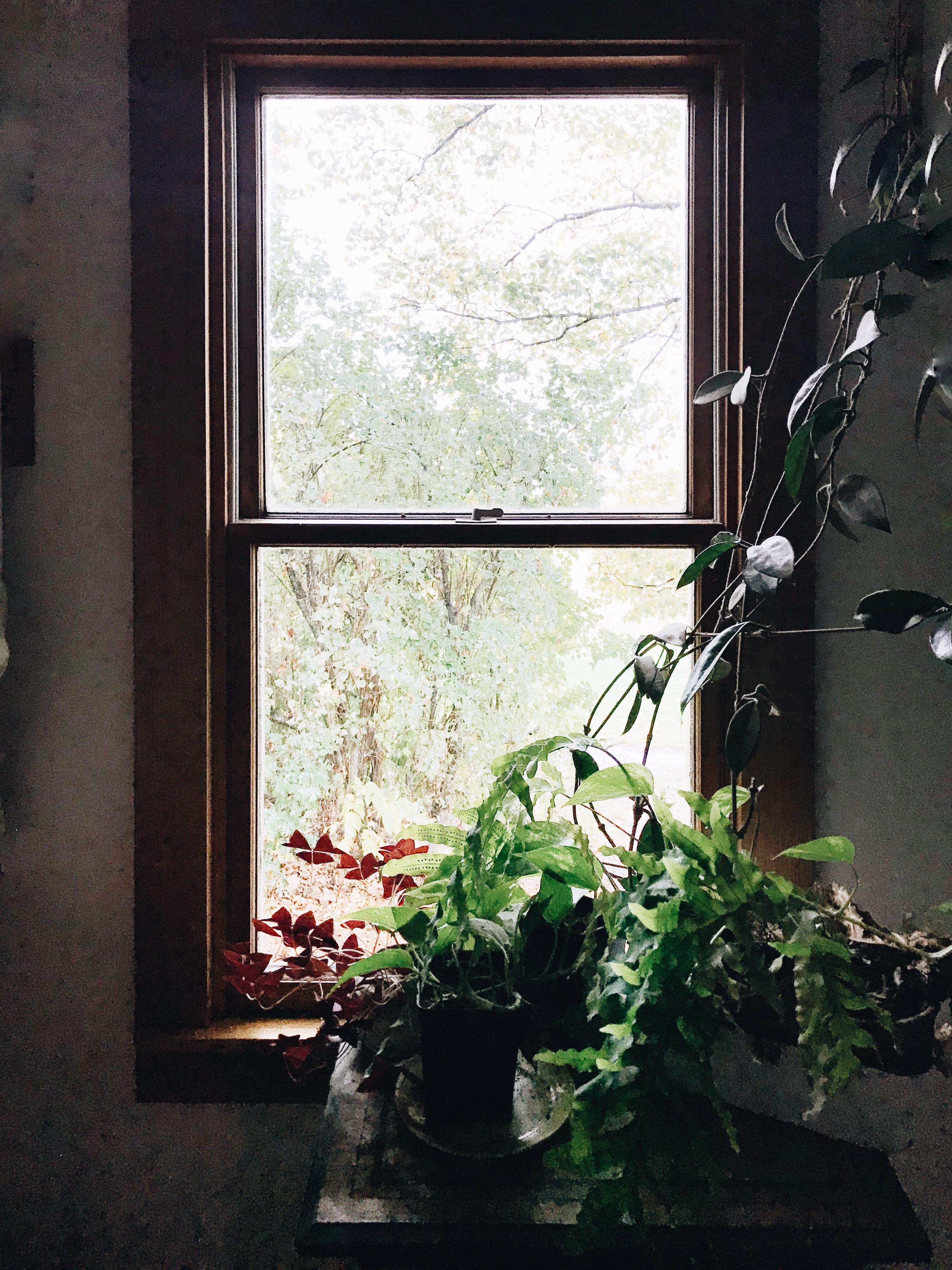 fall bathroom window