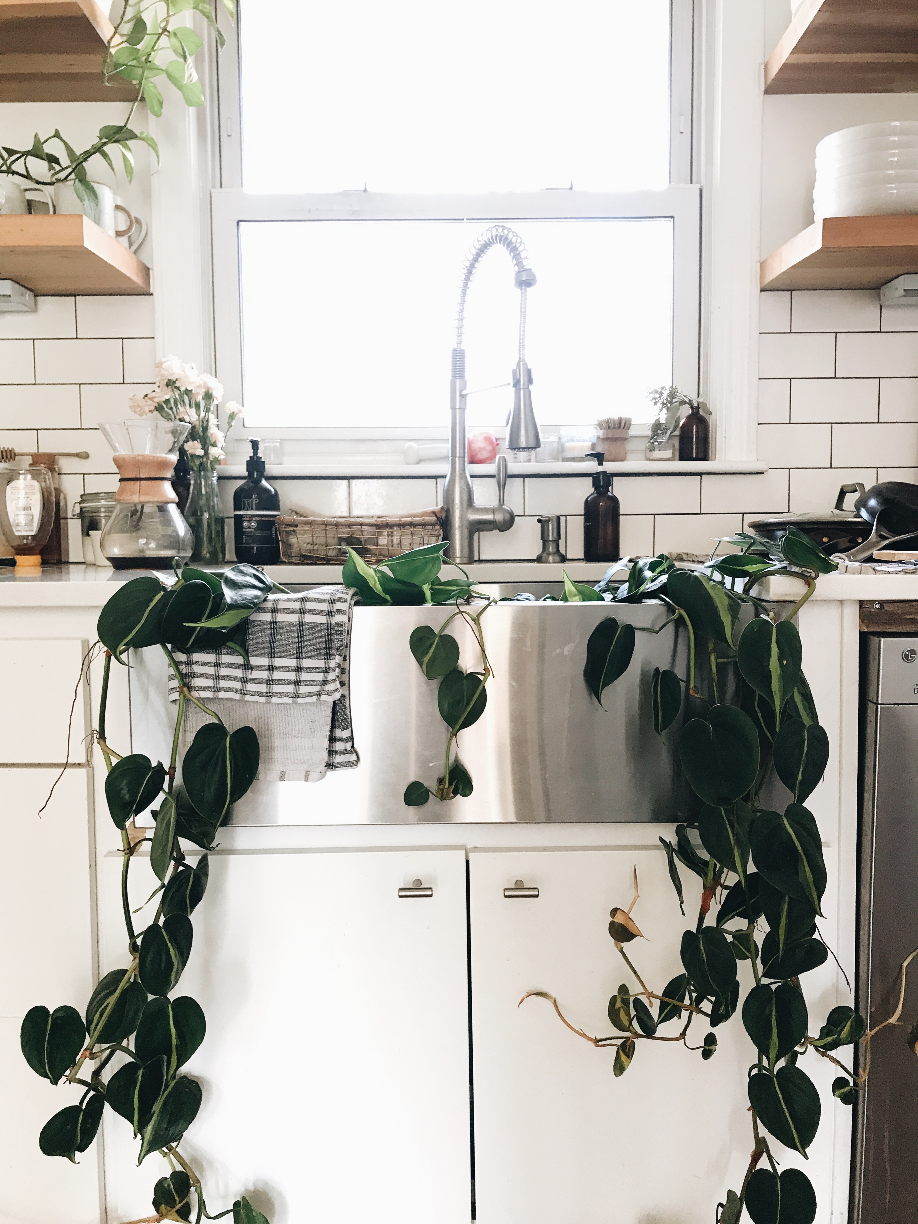 plant in sink
