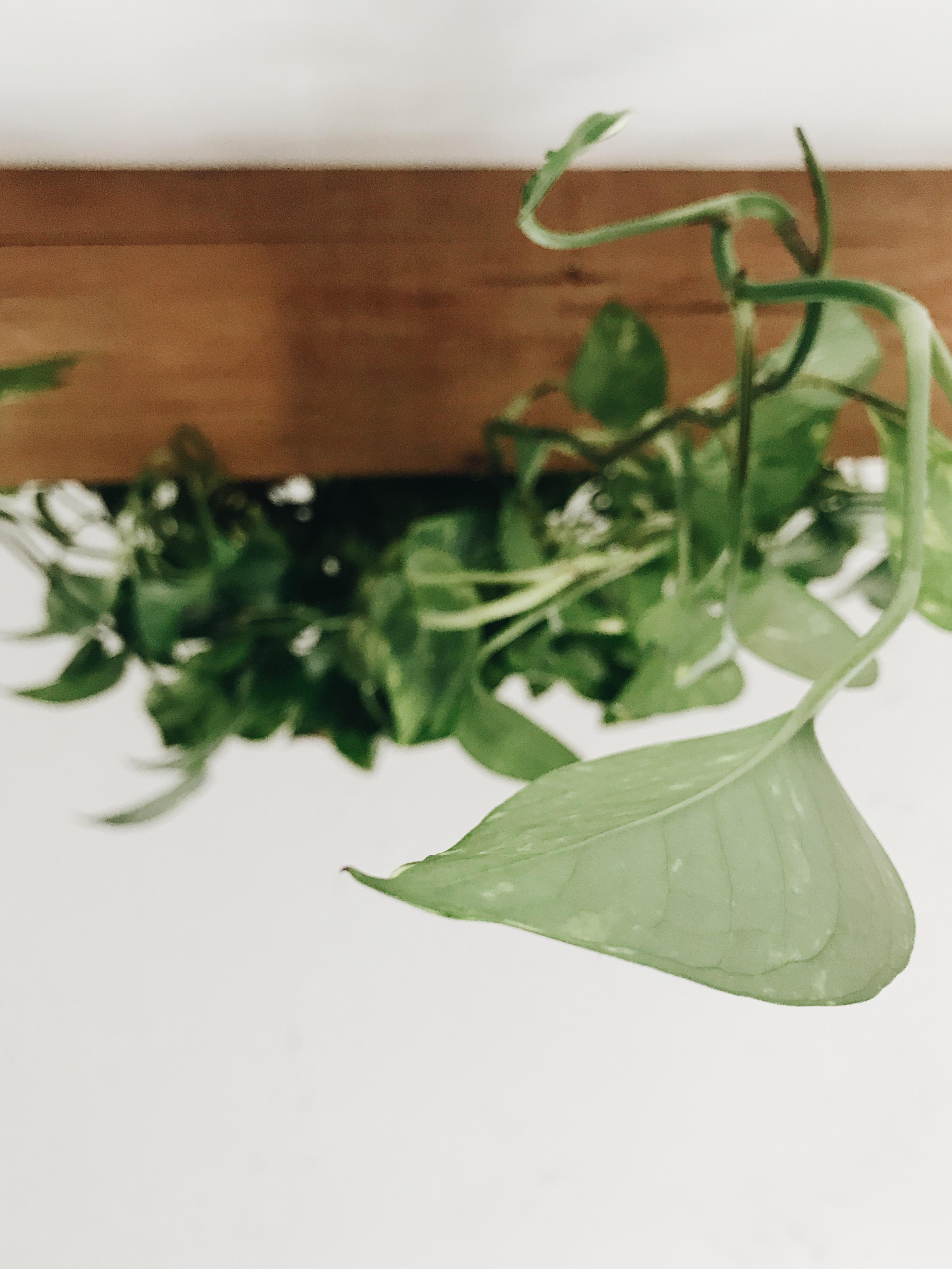 shelf and plant drape