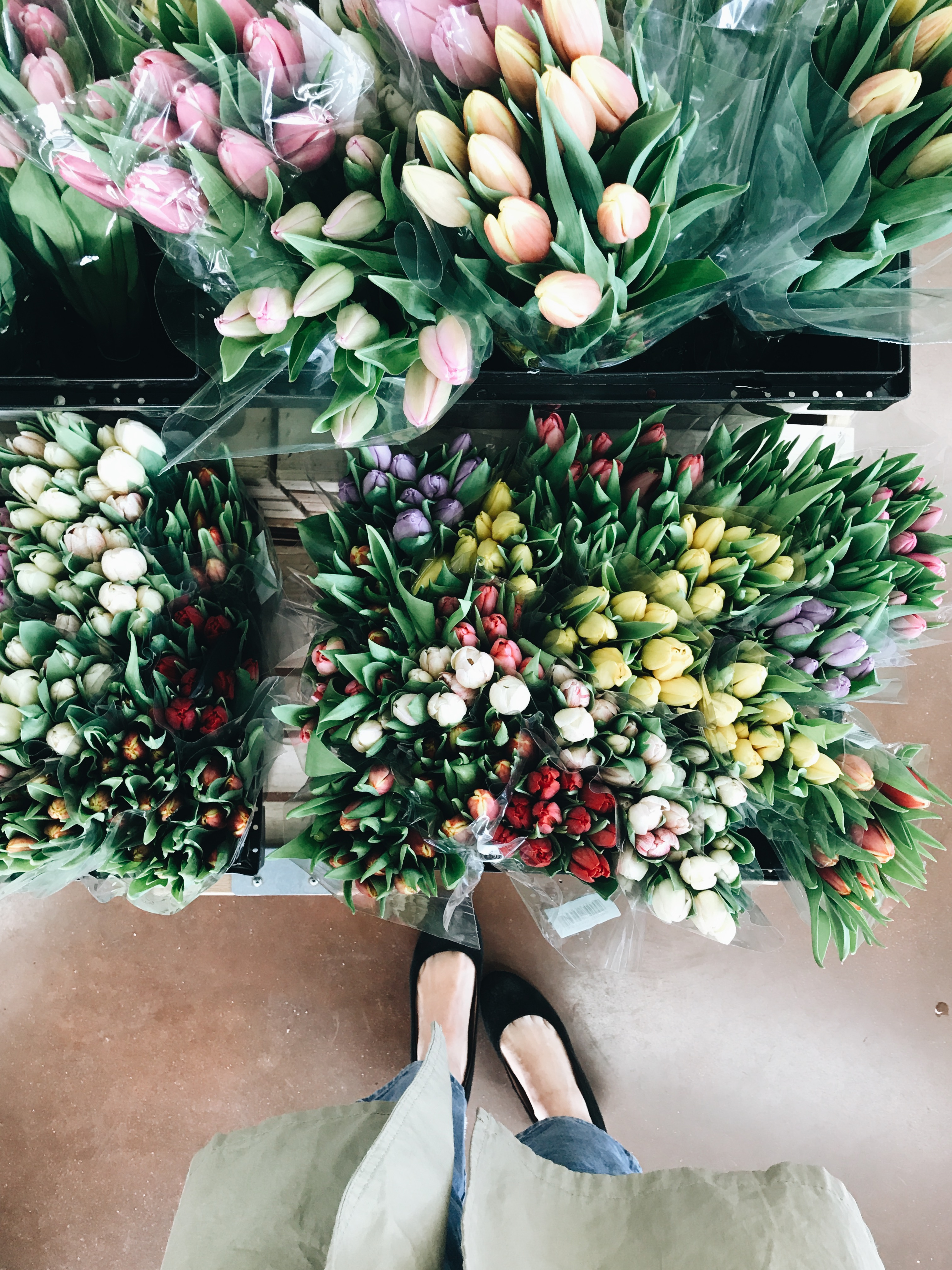 tulips and shoes
