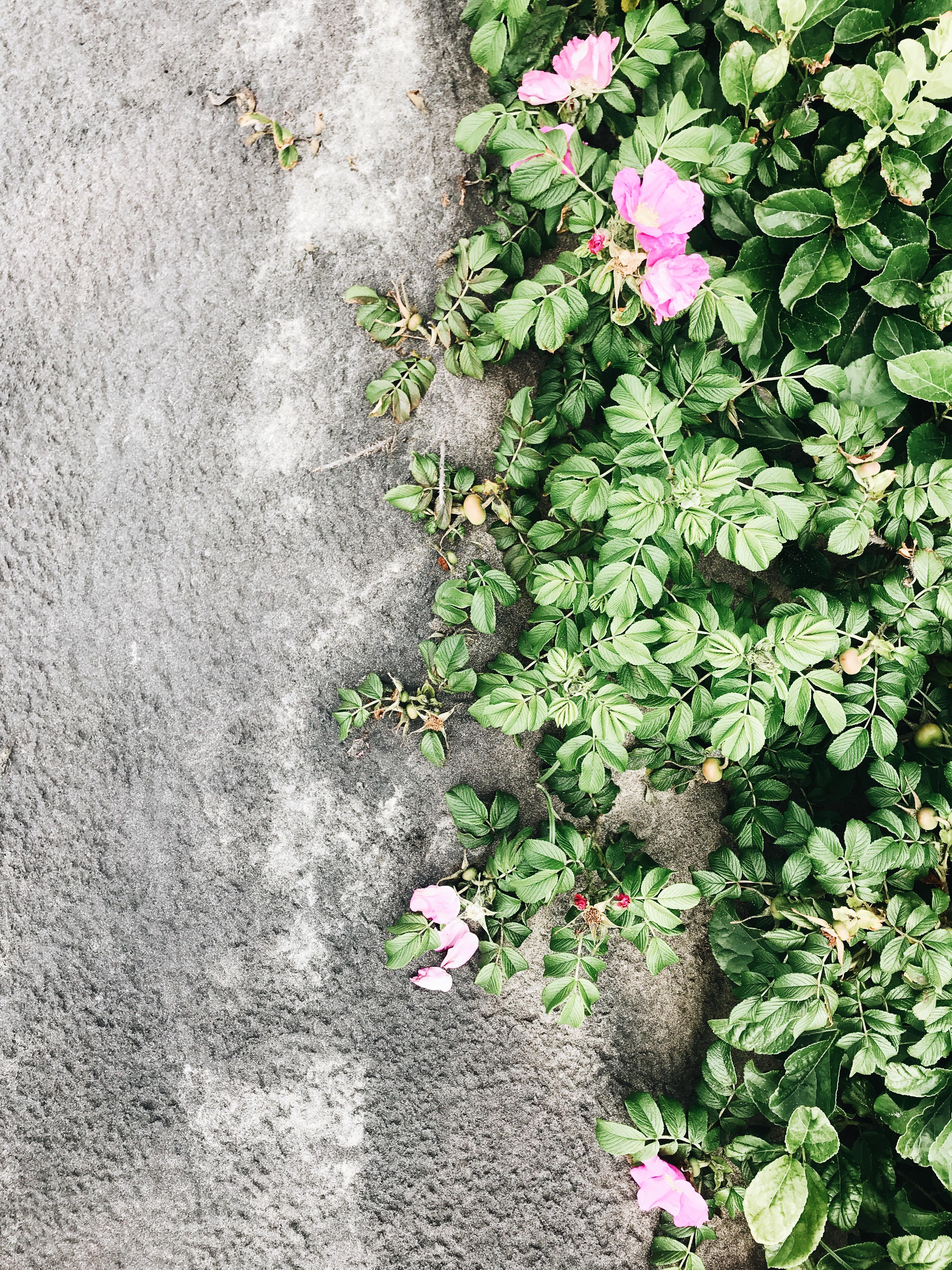 sand vs. green