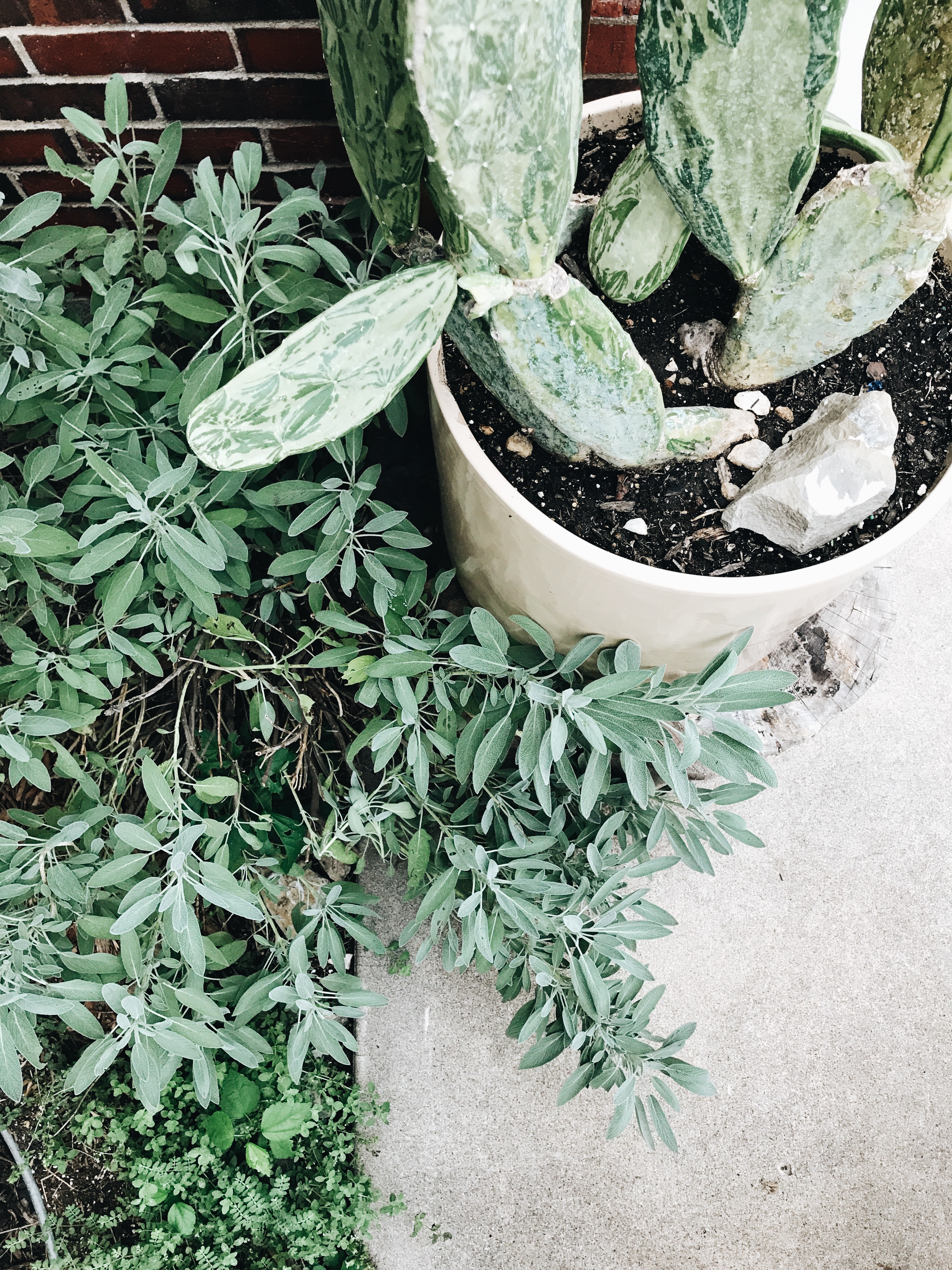 cactus and herbs