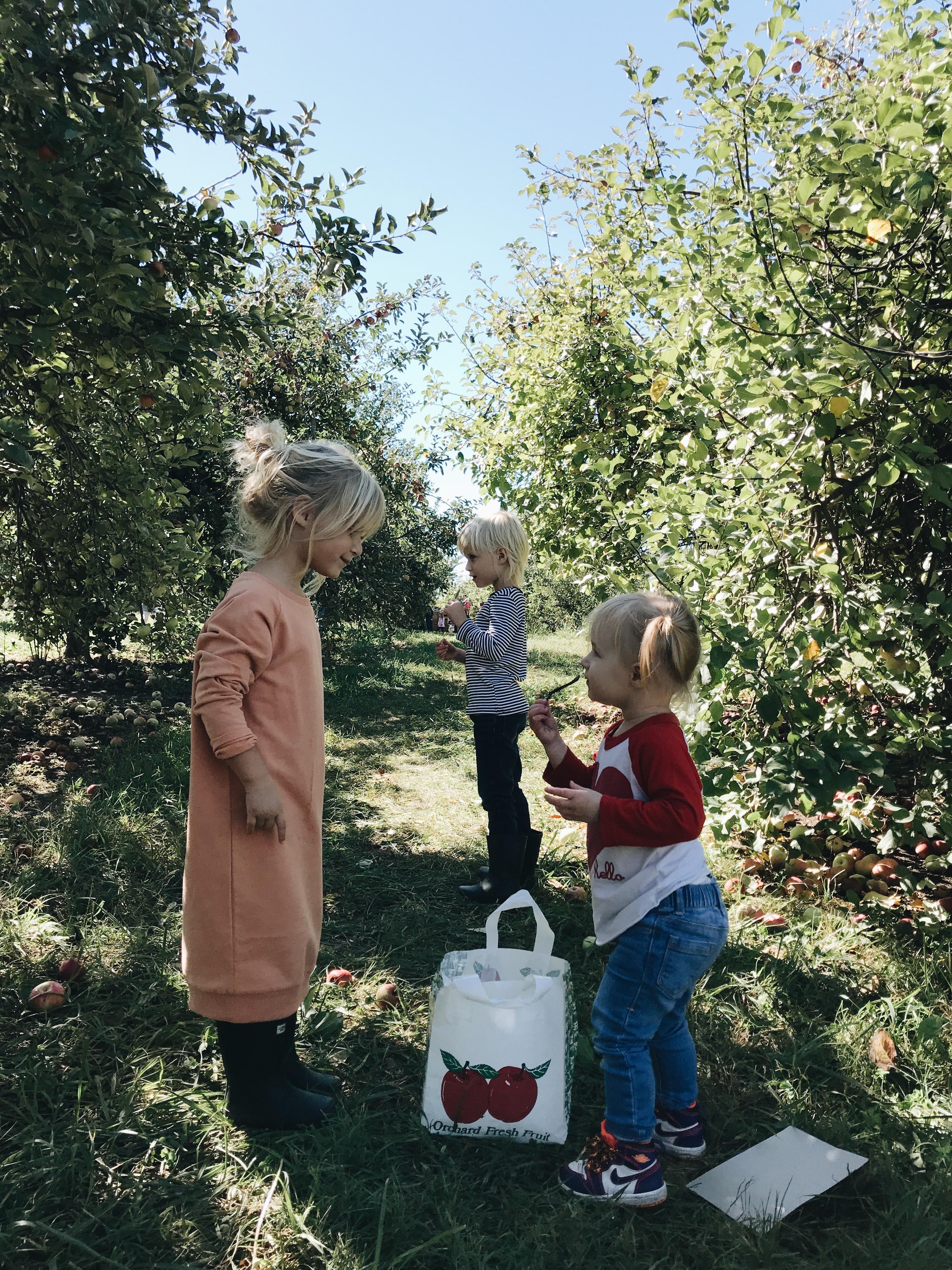 kiddos at the apple orchard