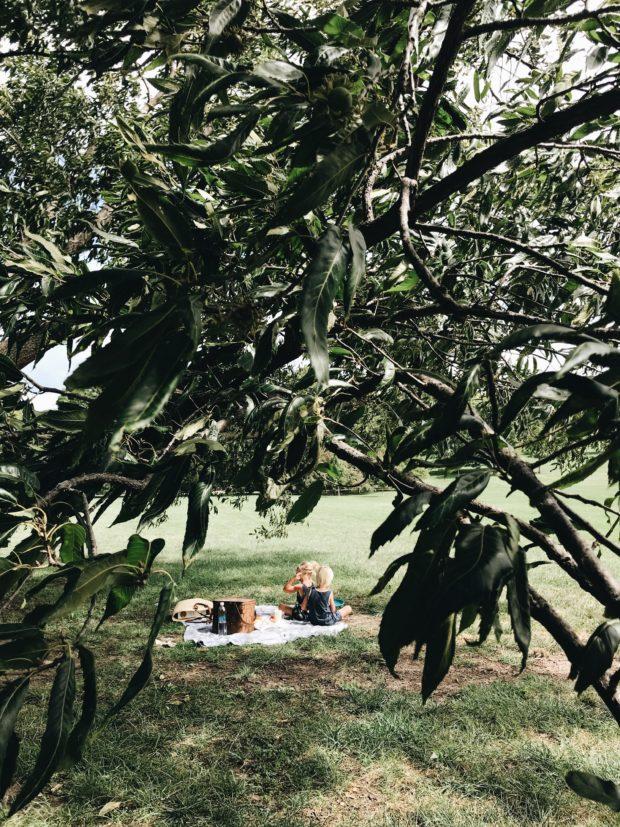 StonyFIELDS Organic Park Movement / Bev Cooks