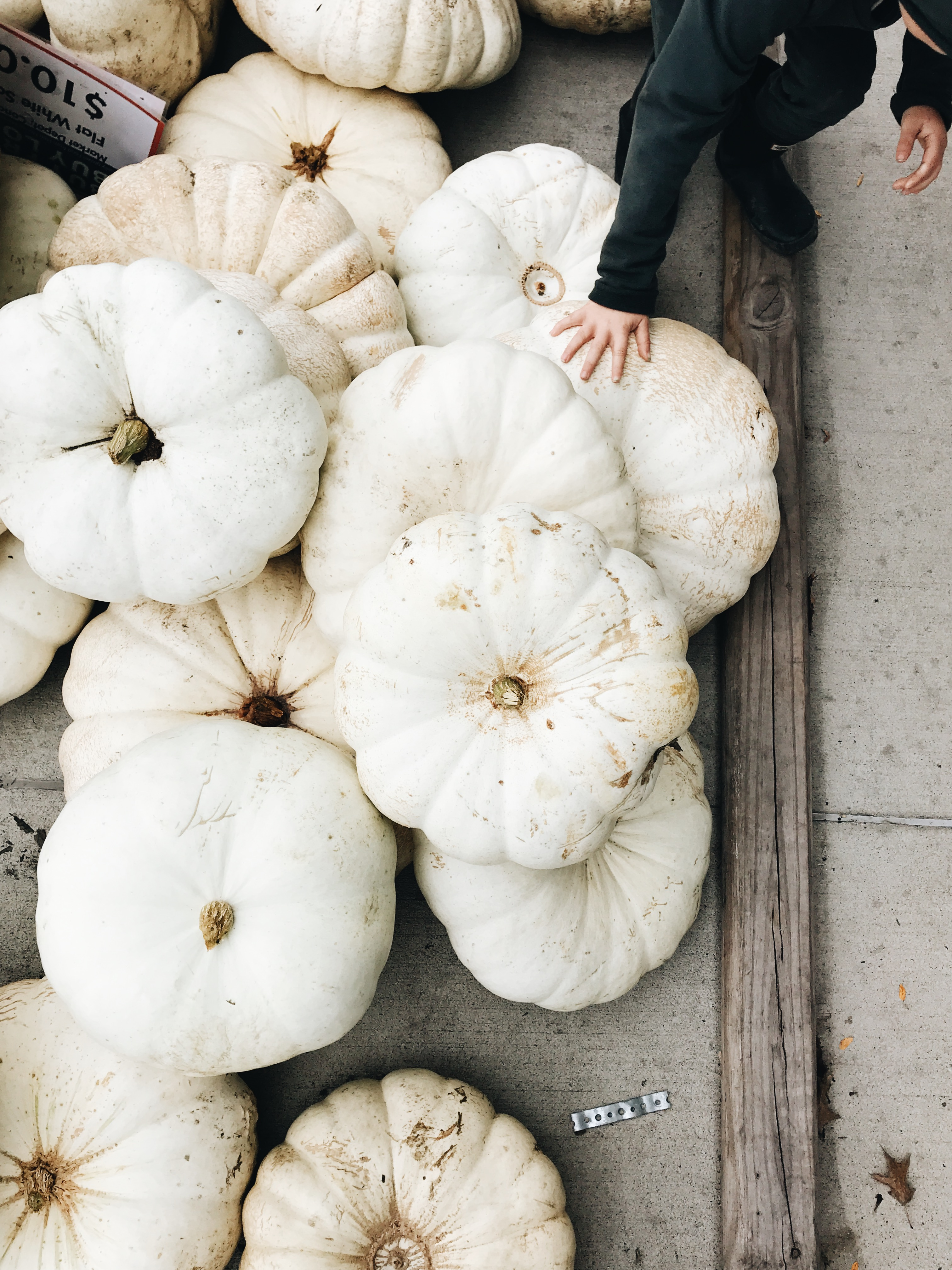 white pumpkins and a baby hand