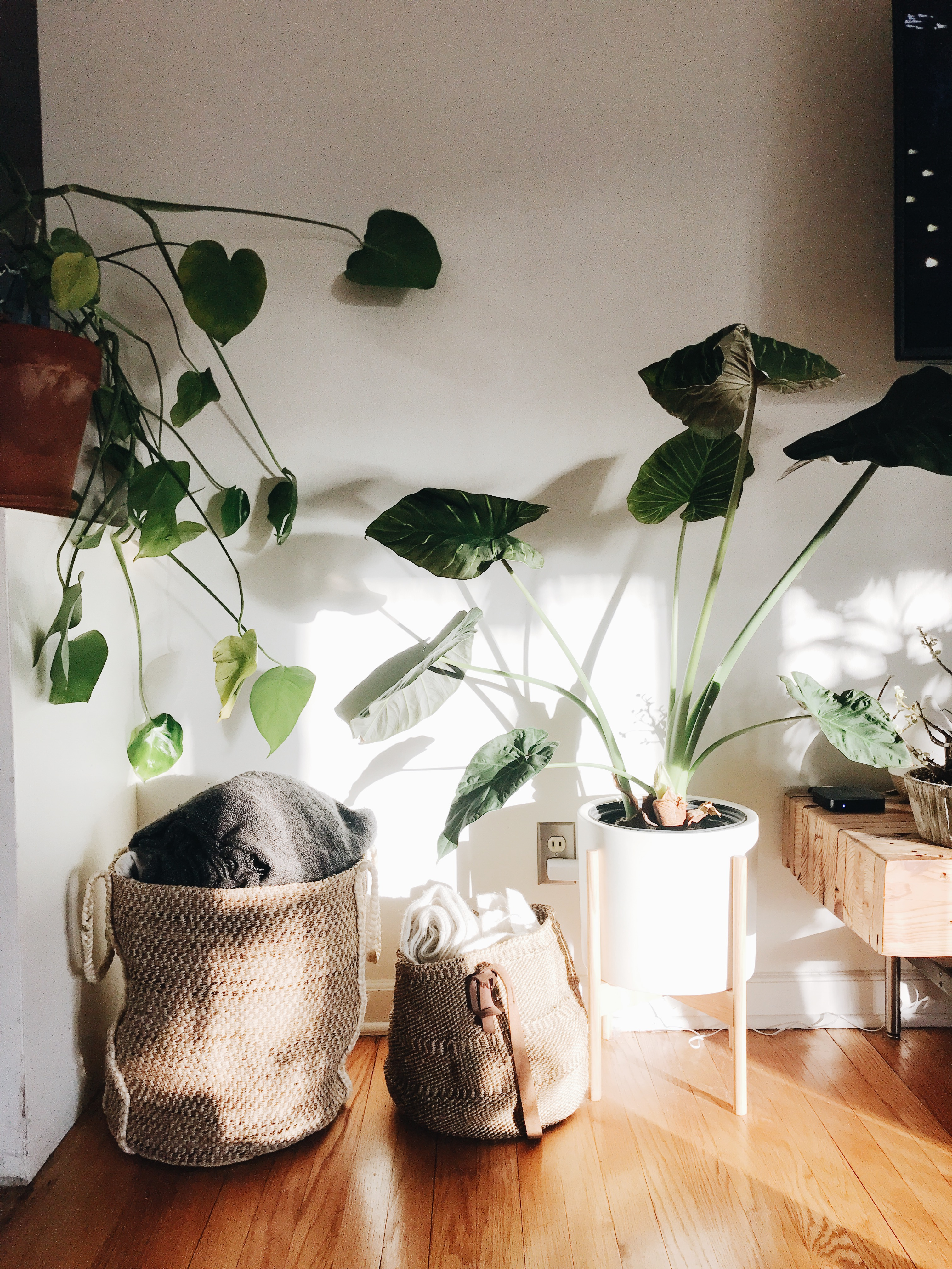 sunlight on baskets