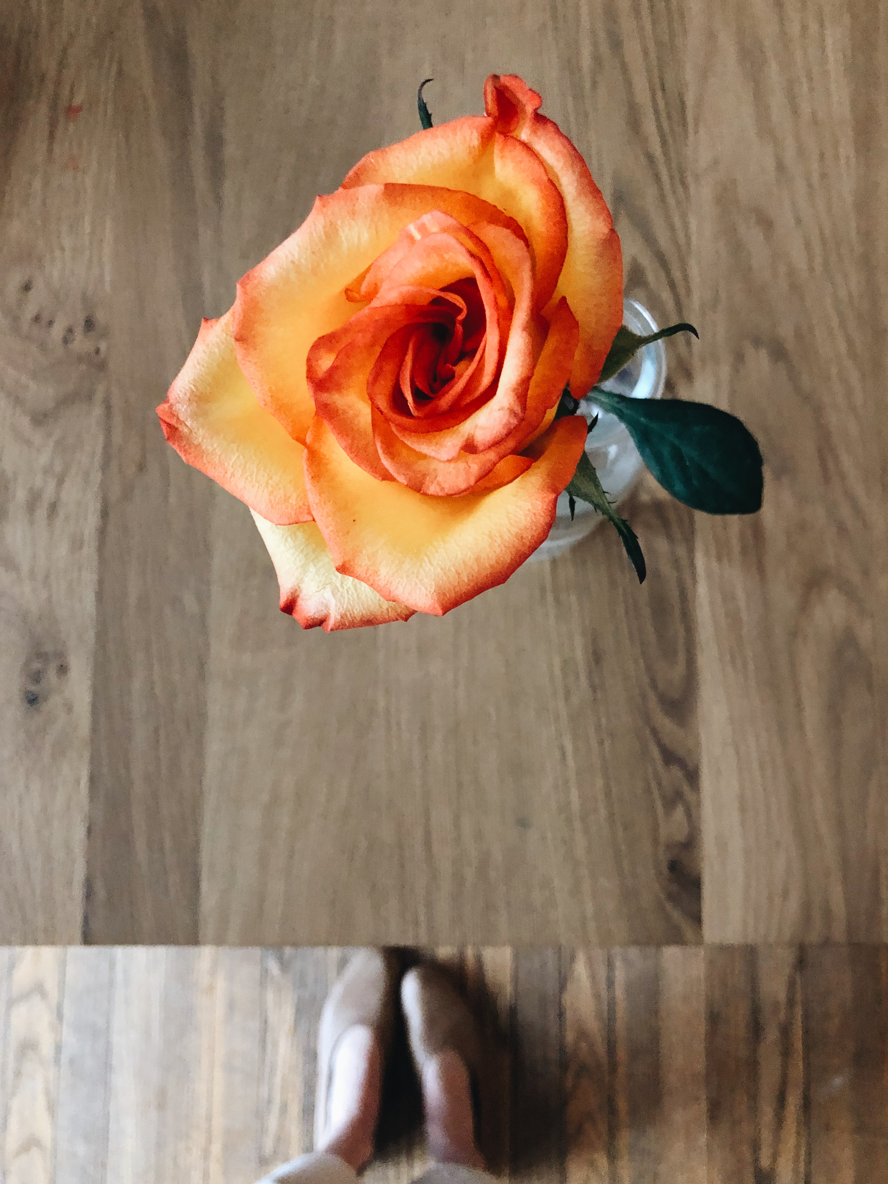 rose and feet