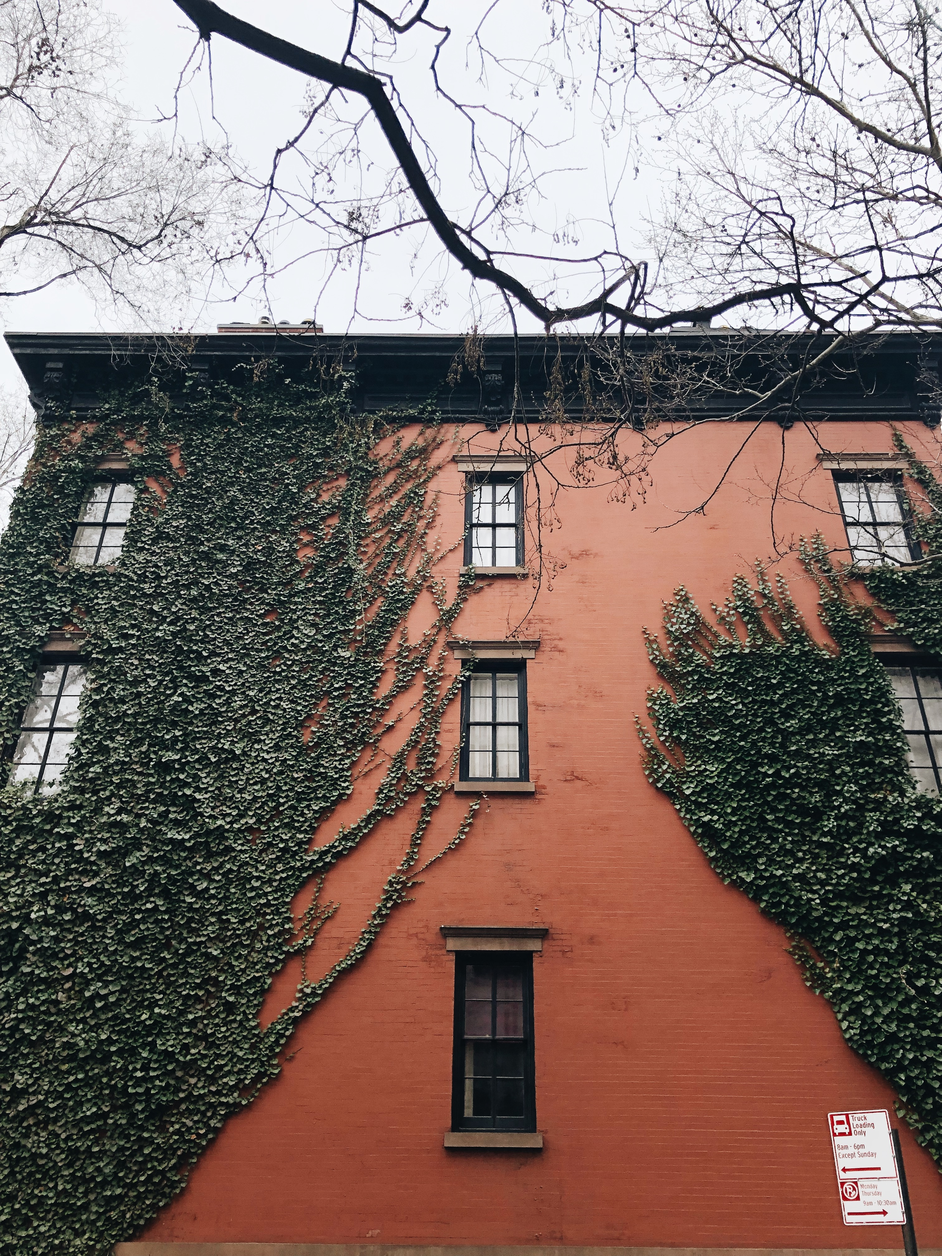 ivy in nyc