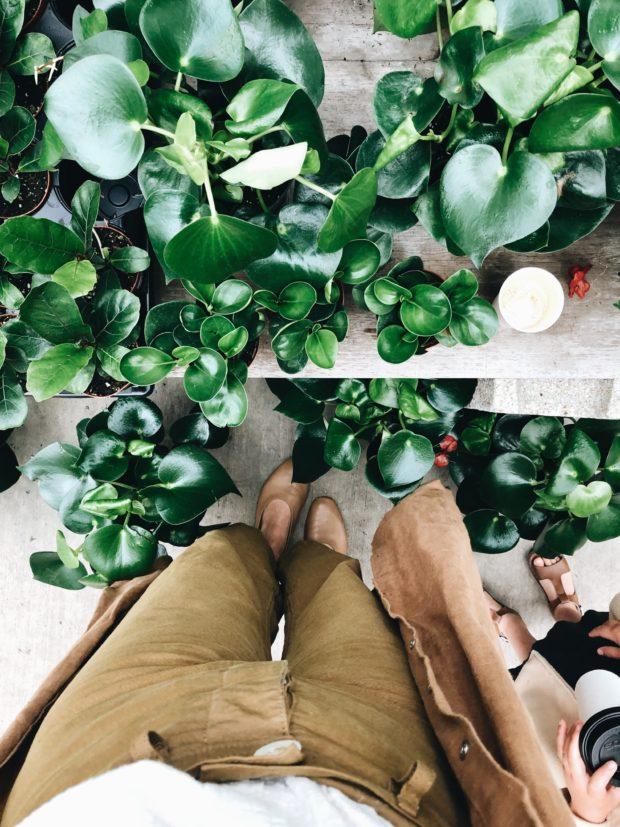 pants and plants