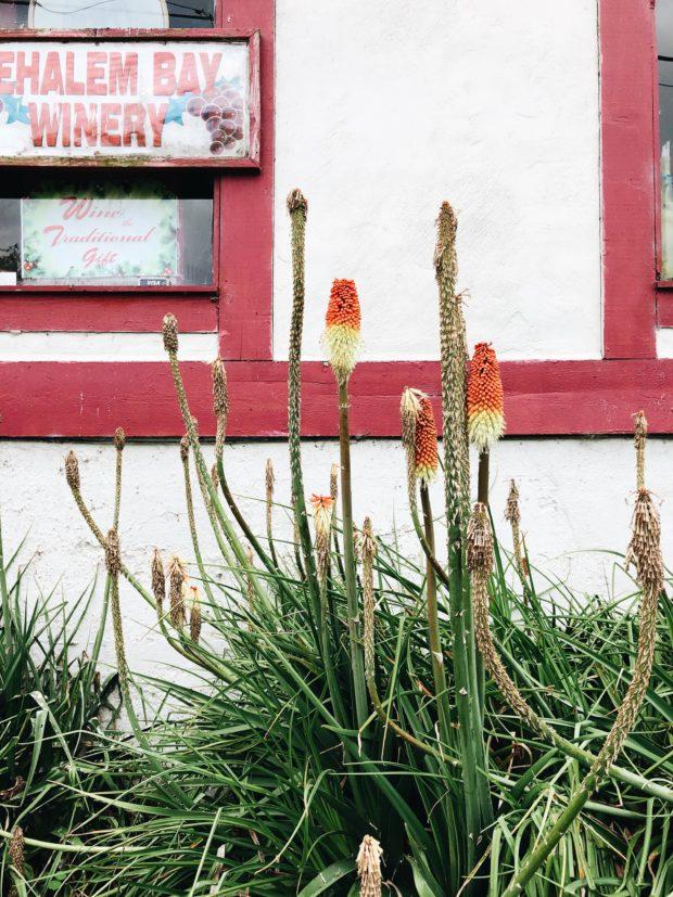 odd but beautiful plants
