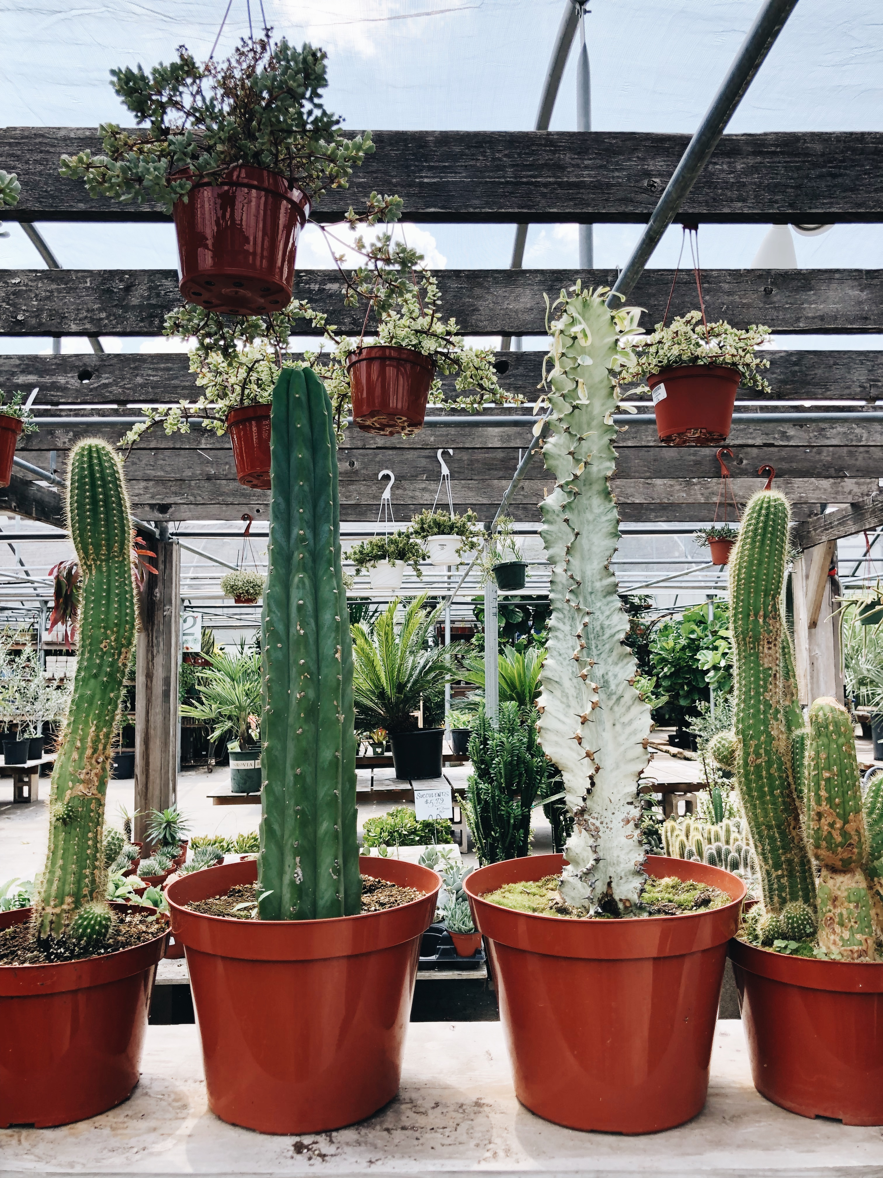 cacti heaven