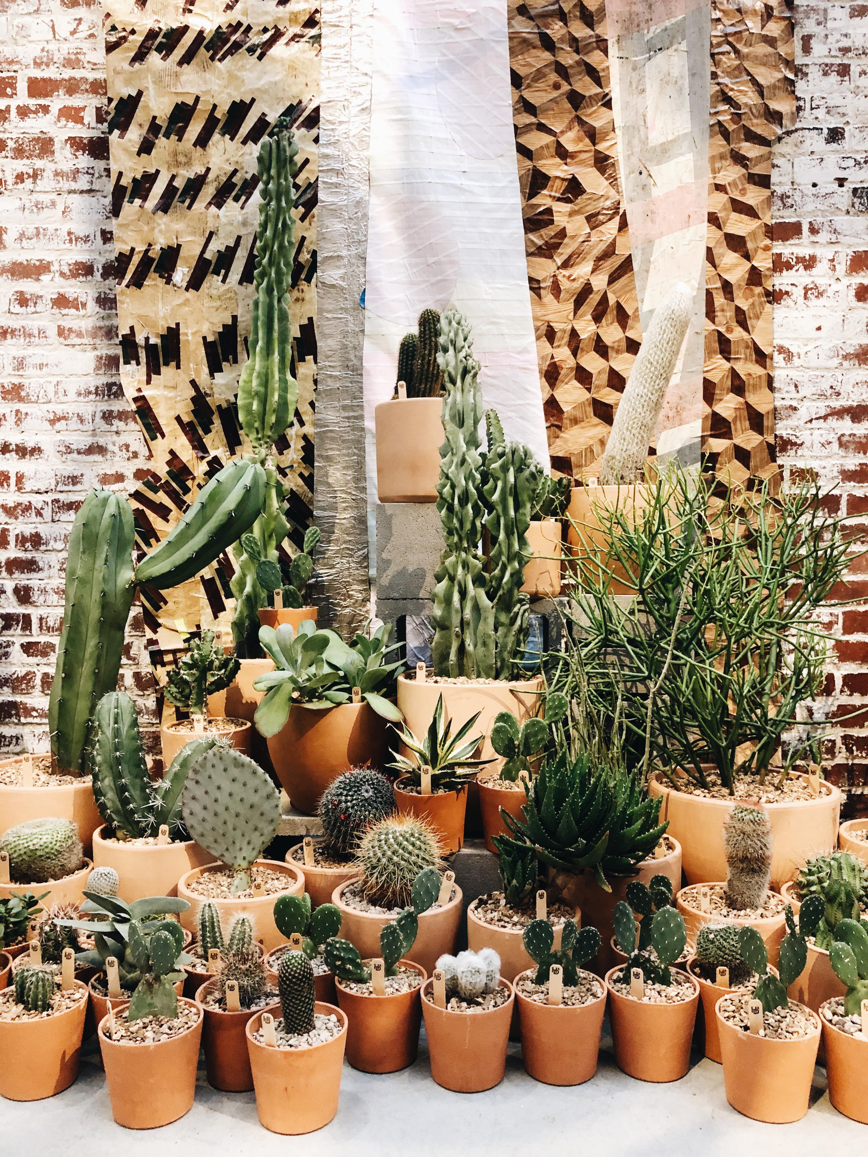 cacti at Crossroads Hotel