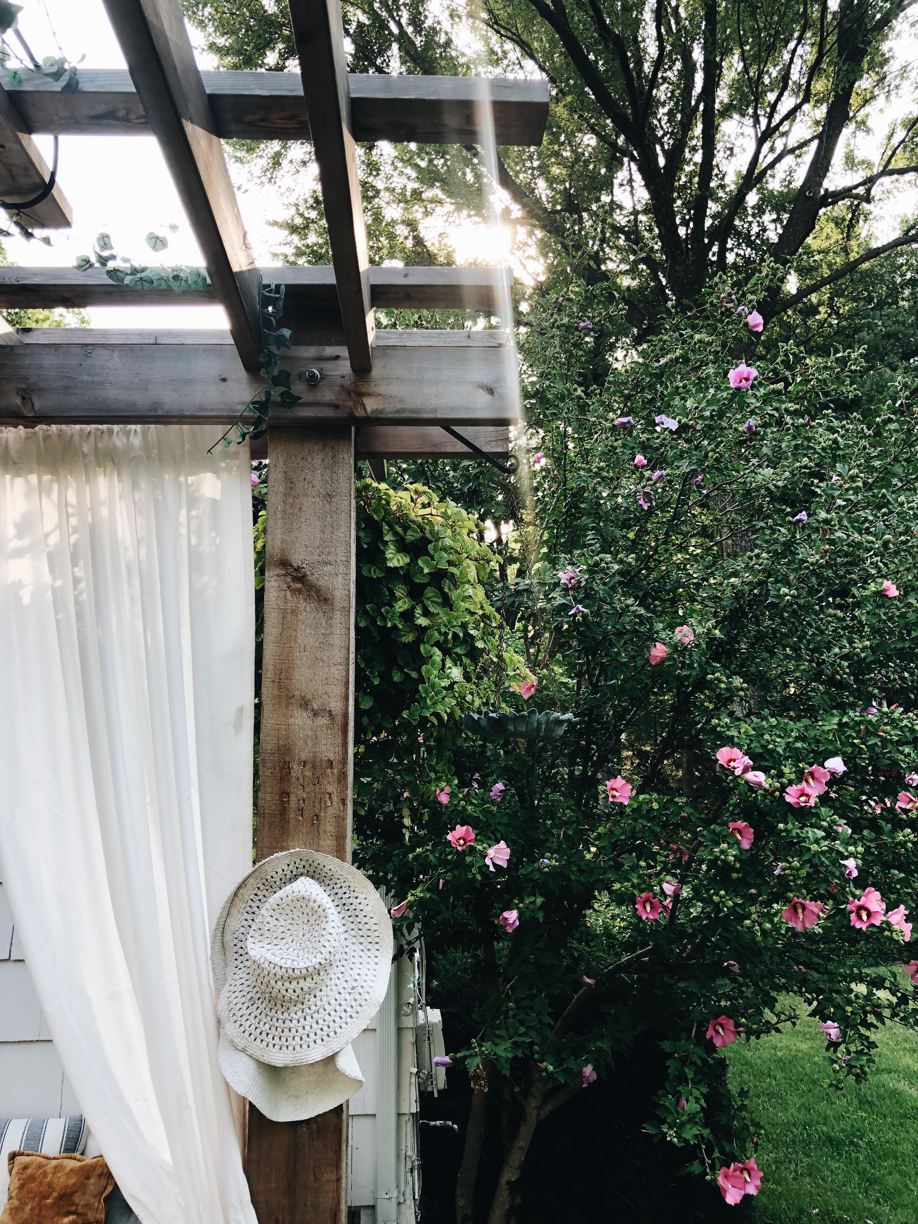 backyard morning