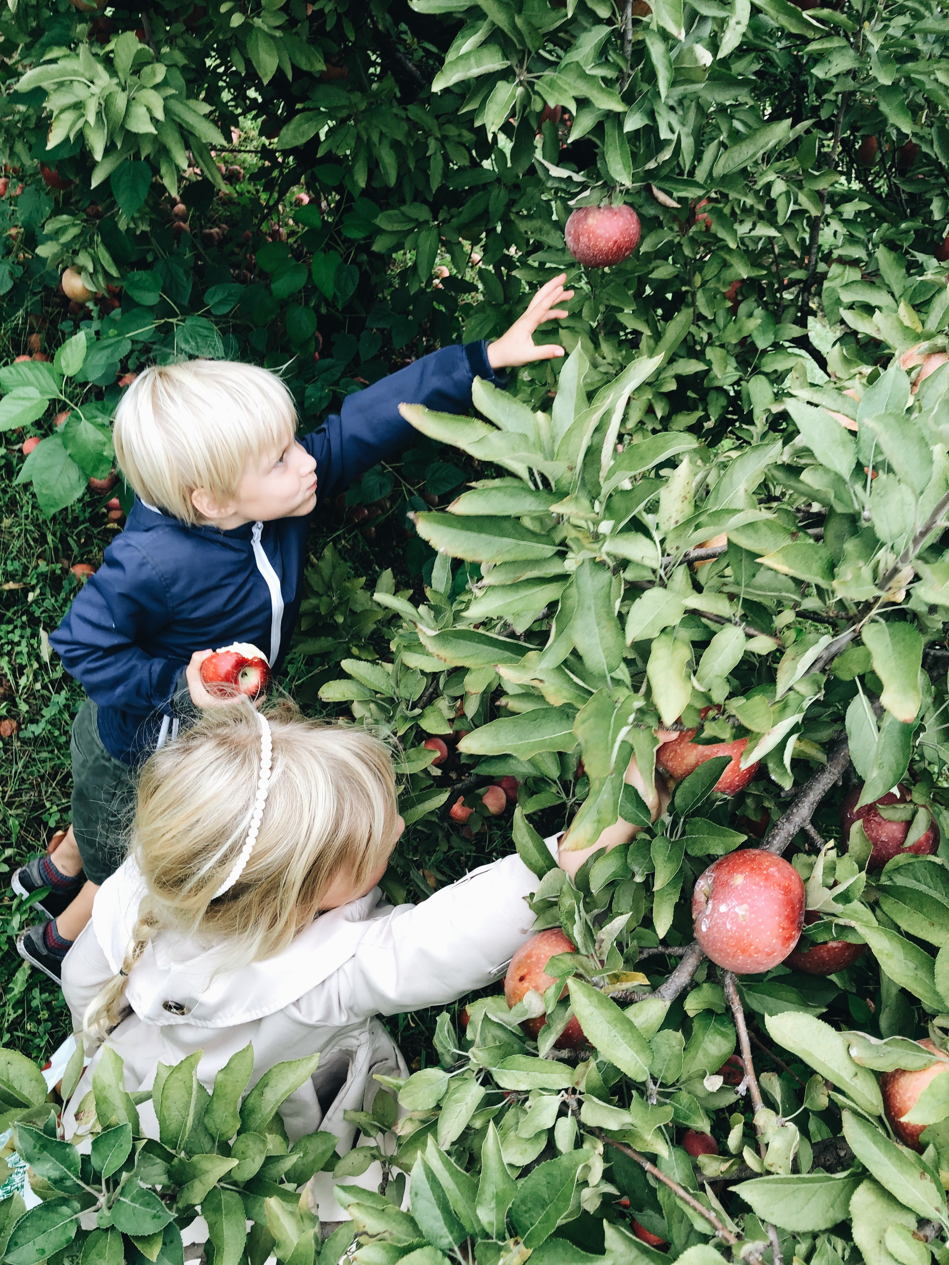 apple reaching