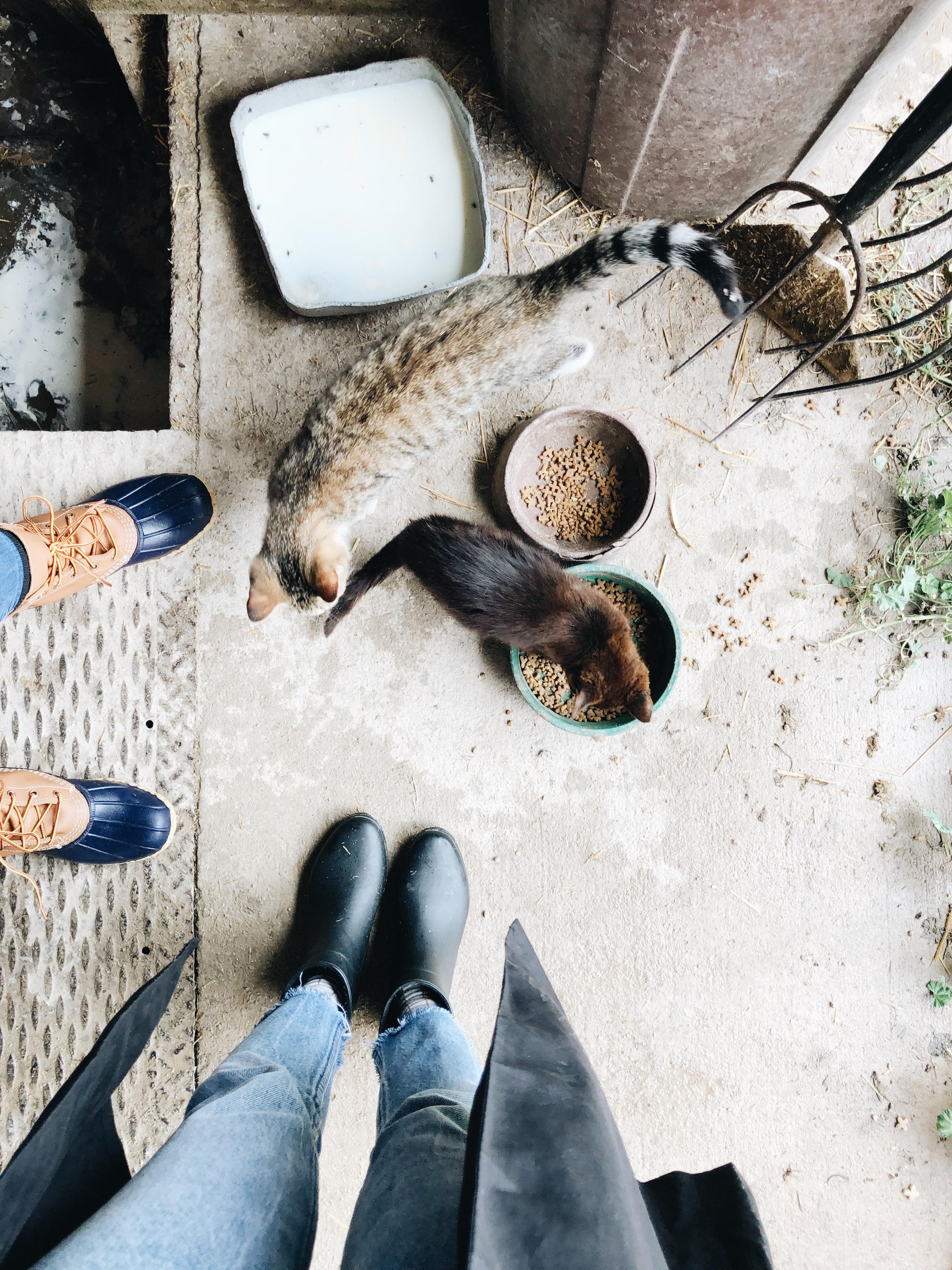 feet and kitties