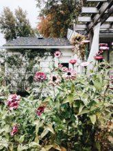 Monthly Mixtape: Ivory Keys and Falling Leaves / Bev Cooks