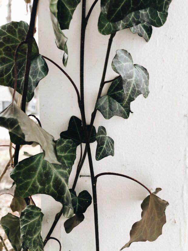 vine in the winter / bev cooks