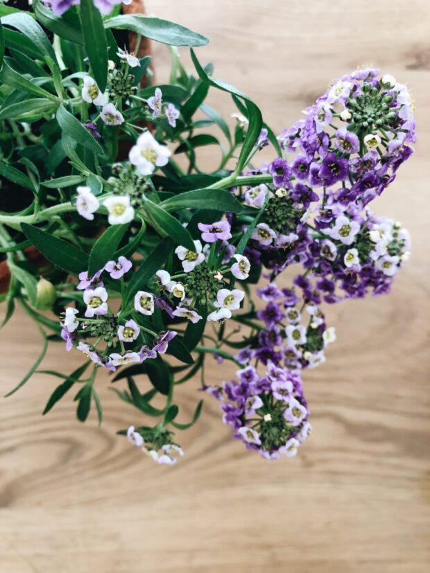 purple flowers / bev cooks