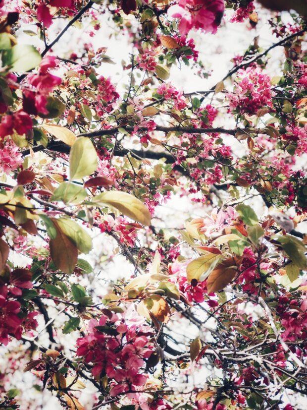 spring tree / bev cooks
