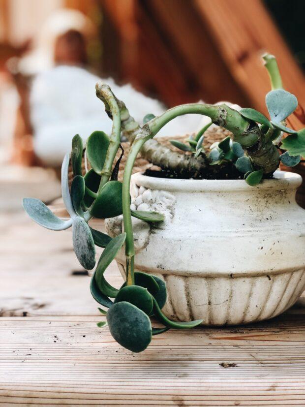 succulent / bev cooks