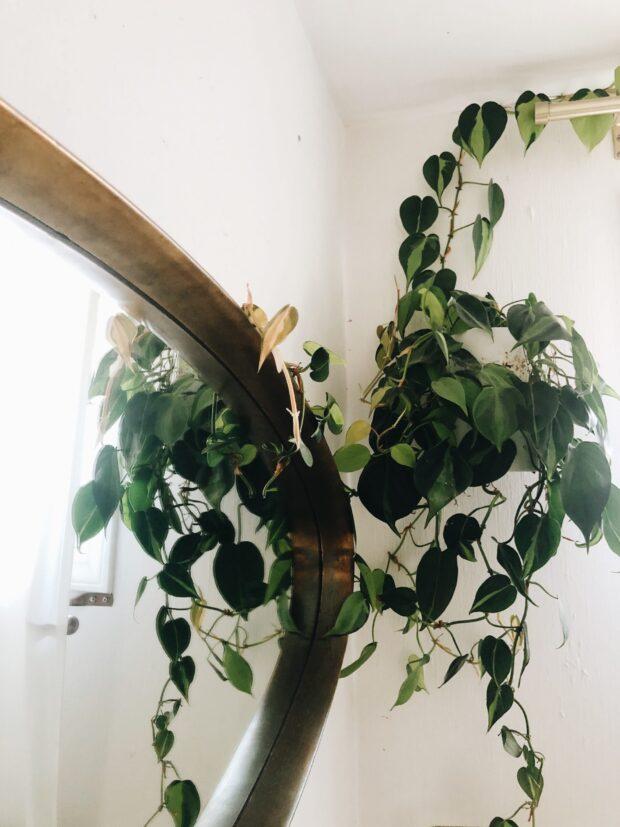 vine and mirror / bev cooks