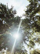 Monthly Mixtape: Humming Trees and Velvet Breeze / Bev Cooks