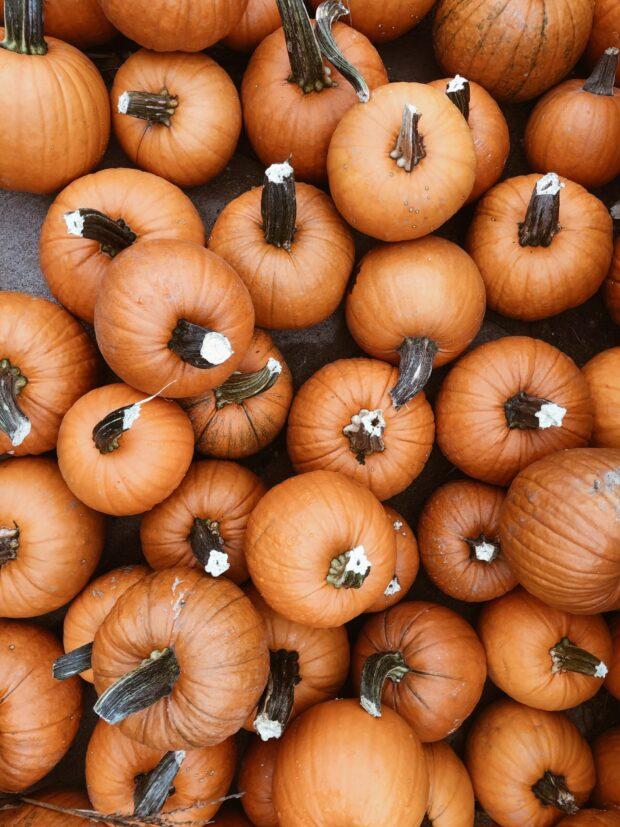 pumpkins / bev cooks