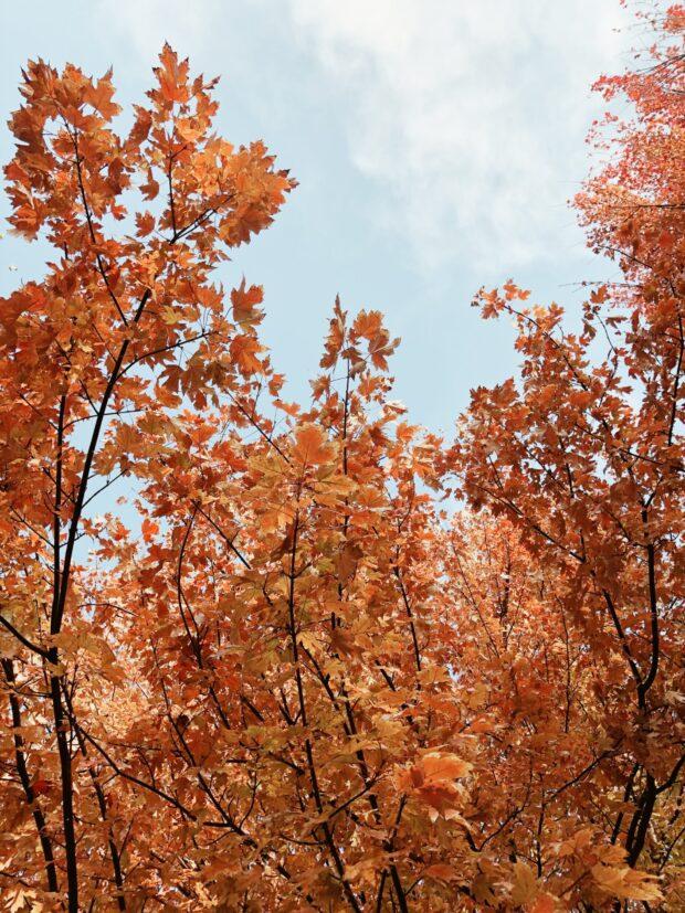 fall trees / bev cooks
